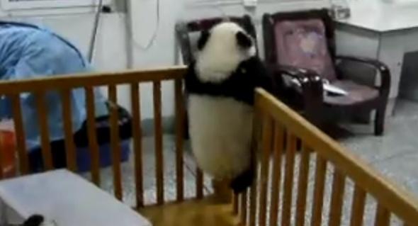 脱獄パンダ